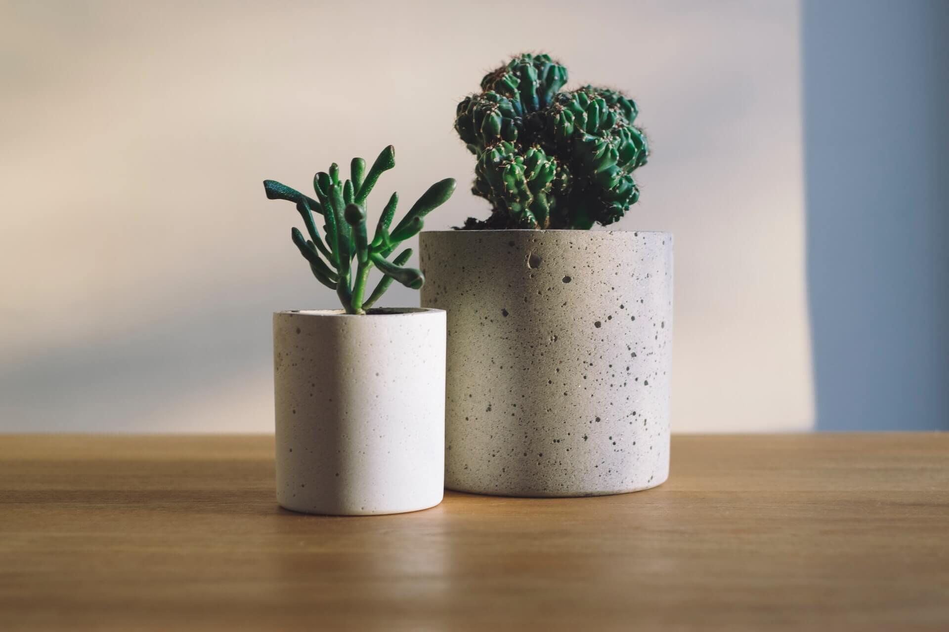 リビングに置く観葉植物の選び方は?特徴別におすすめを紹介
