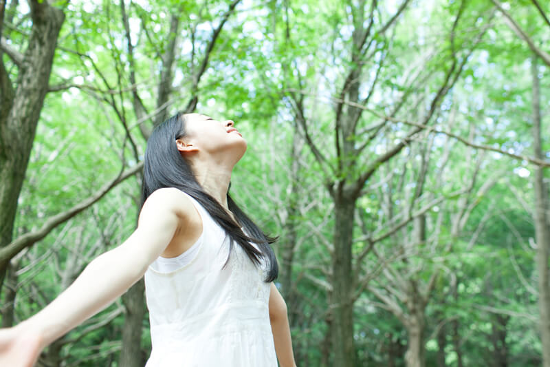 フィトンチッドでおうち森林浴。リラックス効果抜群の空気清浄に注目!