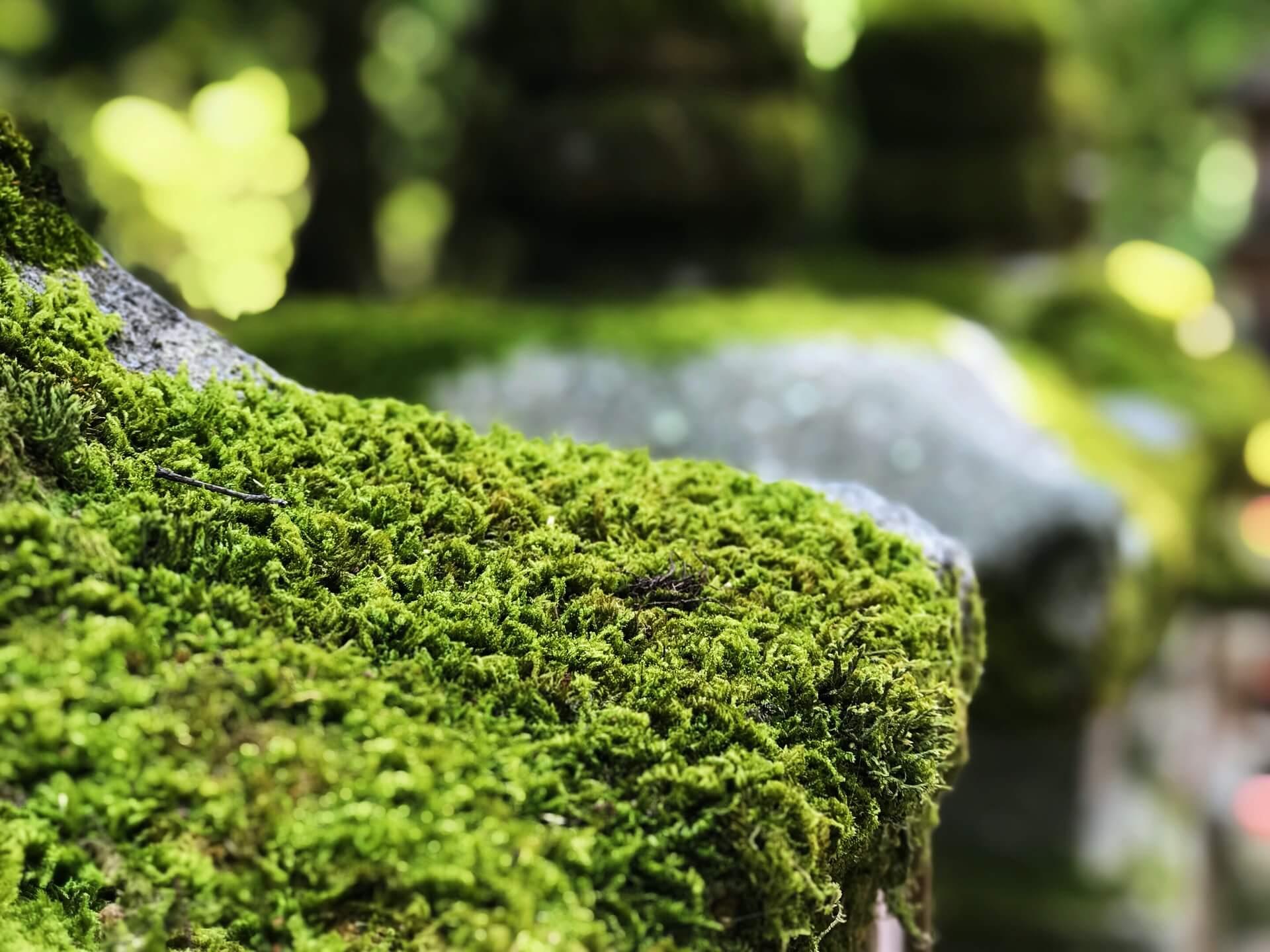 苔を採取するには?苔の基本情報や採取のポイント、注意点も紹介
